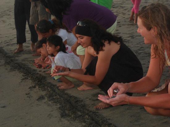 Laguna Ventanilla : lacher de tortue