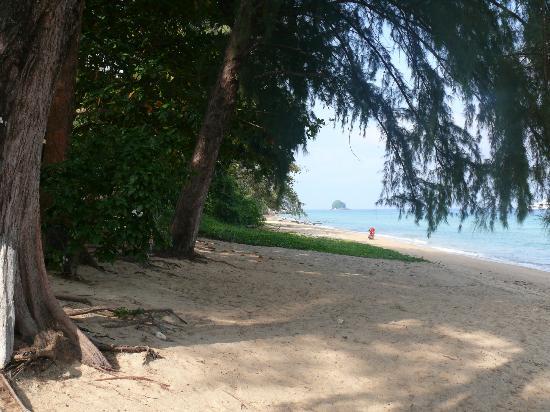 Tekek, Malasia: xxx