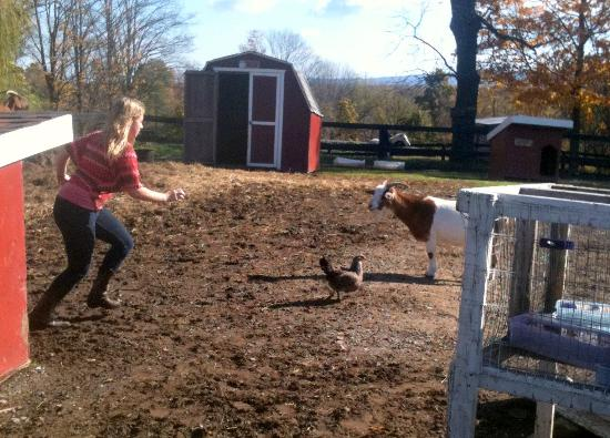 Pinegrove Family Dude Ranch: You will never catch that chicken