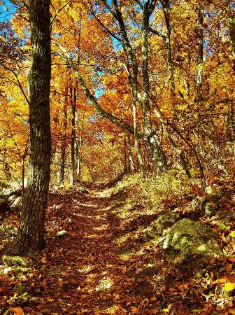 Dickey Ridge Trail: Dickey Trails autumn colors won't disappoint you