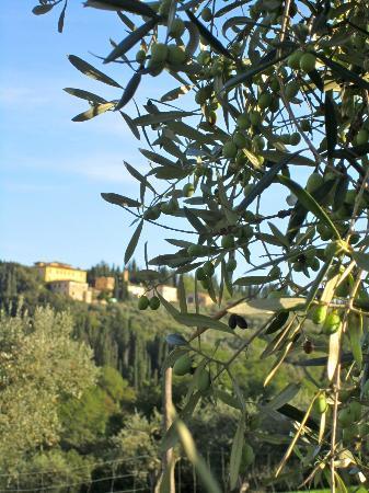 Fattoria Corzano e Paterno: View from the pool, near Fallocchio House
