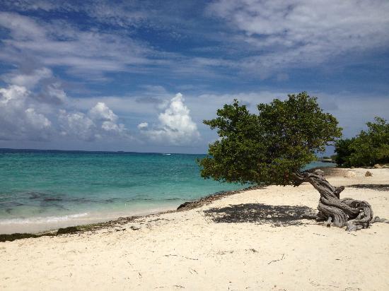 Hotel Riu Palace Aruba: Divi Tree,Eagle Beach