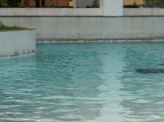 Tropical Manaus Ecoresort: The black line you see around the pool is not decorative. It's dirt. 