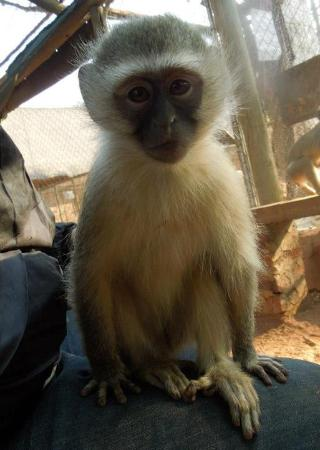 Bambelela Wildlife Care&Vervet Monkey Rehabilitation Farm