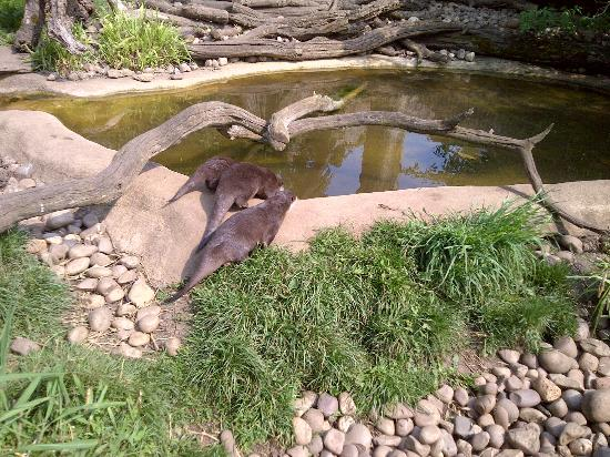 Cotswold Wildlife Park and Gardens: The amazing Otters!