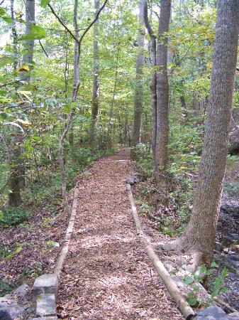 Massanutten Resort: Easy and Beautiful Woods walk
