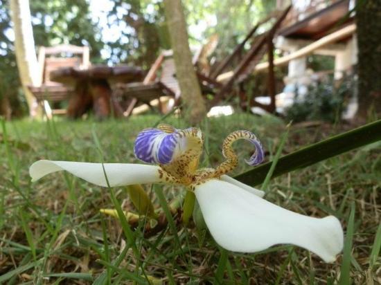 Casa Luzena Guest House: Singelas e raras belezas do local