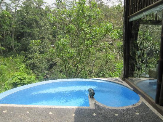 Villa Awang Awang: Pool/View