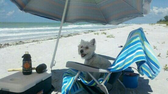 Mitchell's Sandcastles: It's a dogs life on Sanibel Island.