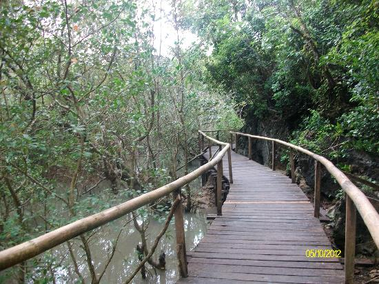Gota Village Resort: Walking trail past the mangroves.
