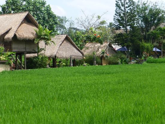 Tegal Sari: some of accommodation