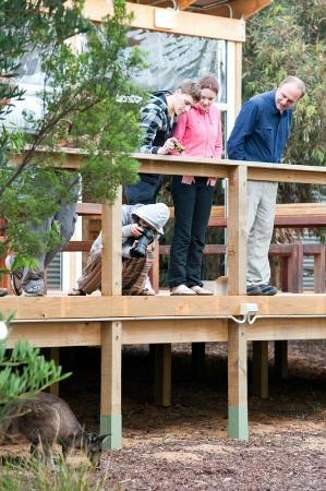 The deck at Vivonne Bay Lodge