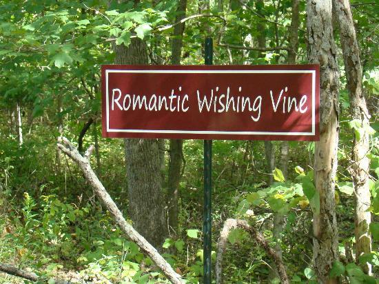 Inn on Crescent Lake: The romantic wishing vine on the walking trail.