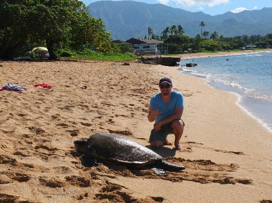 Hang Loose Picture Of Hawaii Turtle Tours Honolulu Tripadvisor
