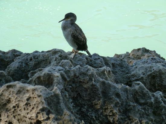 Parc Natural de Mondrago: A shag on the rocks!