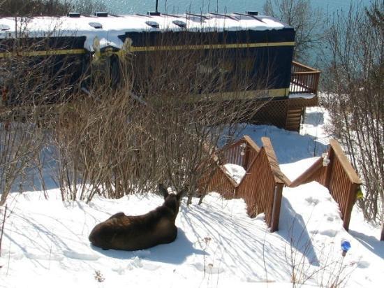 Alaska Adventure Cabins: Moose at the Moose Caboose
