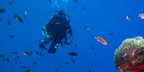 Crystal clear waters around the Similan islands, experience it with Similan Dive Center