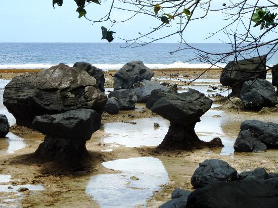 Taveuni Island Resort & Spa: Coastal walk