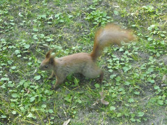 Parque Lazienki: parco lazienki - scoiattolo