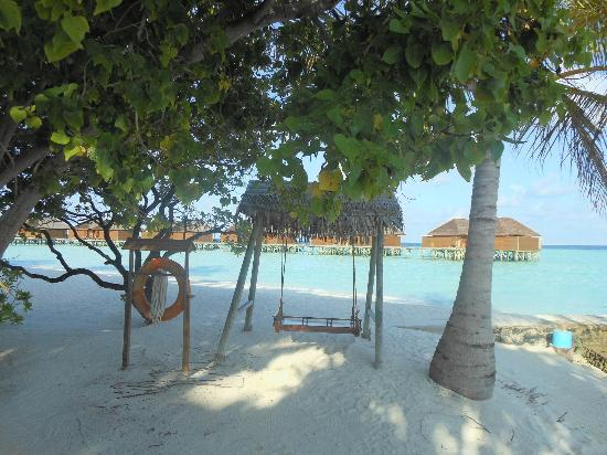 Veligandu Island Resort & Spa: Island Swing