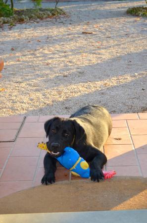 Il Casale del Cotone: Balù the black Labrador