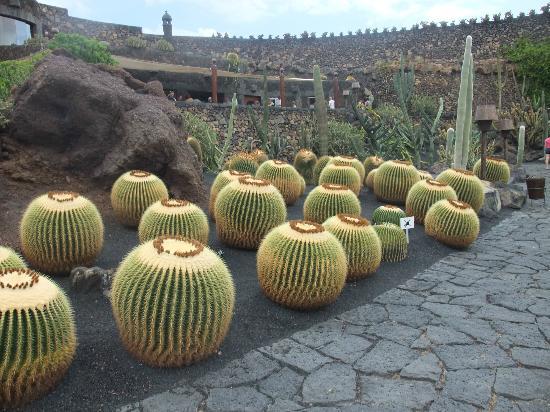 Guatiza, Espagne : Ground level cactus