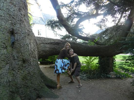 Hotel le Clos d'Amboise: Huge tree on the lovely grounds