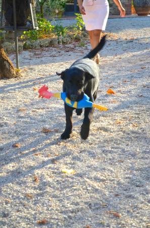 Il Casale del Cotone: Adorable playful Balu