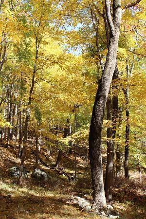 Bear Mountain State Park: Hiking through the fall leaves...