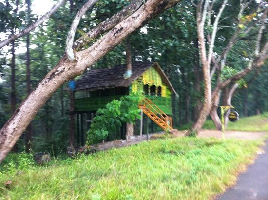 tree top cottage picture of parambikulam tiger reserve palakkad rh tripadvisor com
