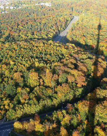 Television Tower (Fernsehturm): Aussicht über den Herbstwald