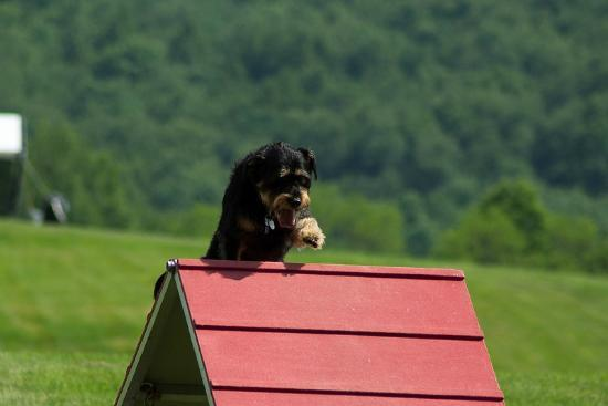 The Getaway at Glen Highland Farm: Lucy trying out the agility equipment