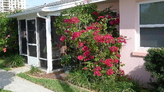 East Shore Resort: Bougainvillea outside #4