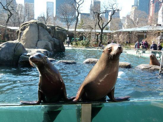 Central Park Zoo Restaurant Reviews