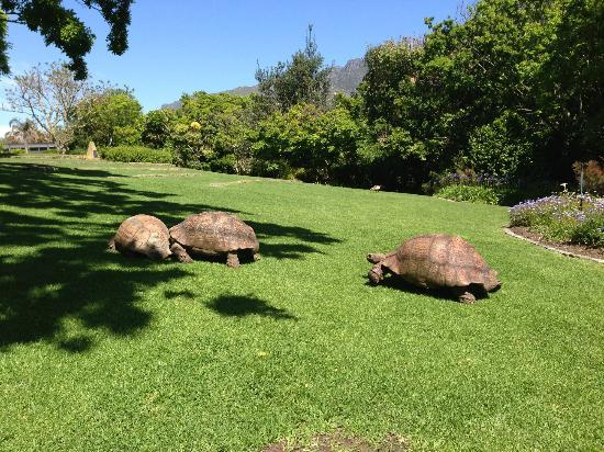 Vineyard Hotel: Three of the aged residents!