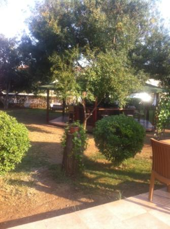 Asena Motel: the tree bar in the garden