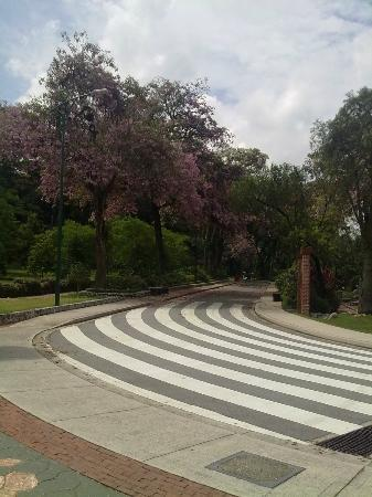 Perdana Botanical Garden: Beautiful tree
