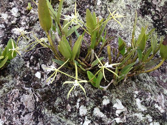 The Hermitage Plantation Inn: orchids growing from volcanic rock