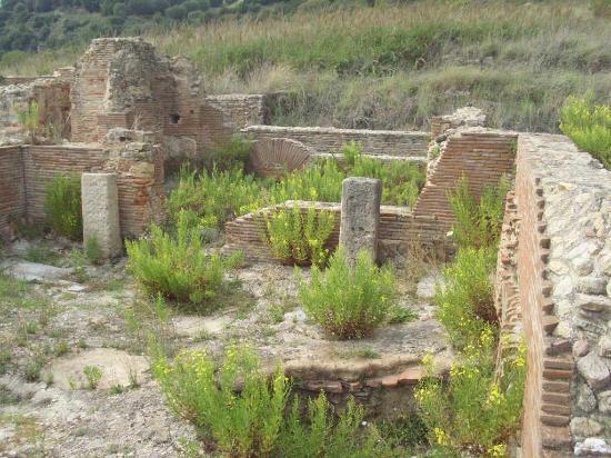 Marina di Ascea, Italia: Erba erba...