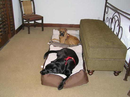Hermosa Inn: Jr. and Jake relaxing in room on provided Kong beds.