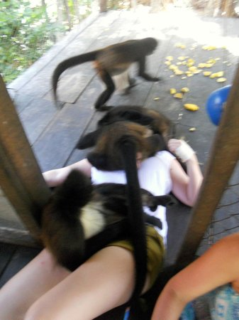 The Jungle Place - Tours: Monkey nap!