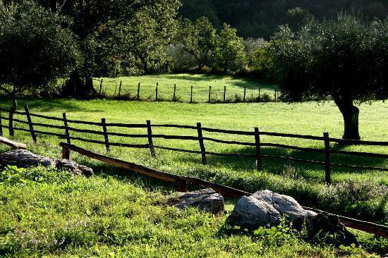 Azienda Agrituristica Bio Le Macchie Alte : une petite partie des 420 ha