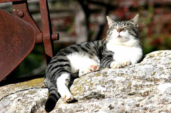 """Azienda Agrituristica Bio Le Macchie Alte : """"il gatto"""""""