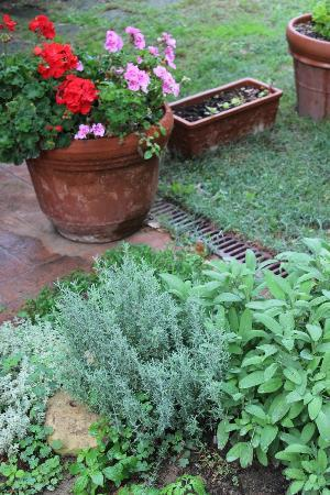 Tasty Tuscany: Fresh herbs