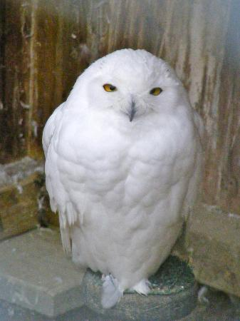 Owl Tours Llc