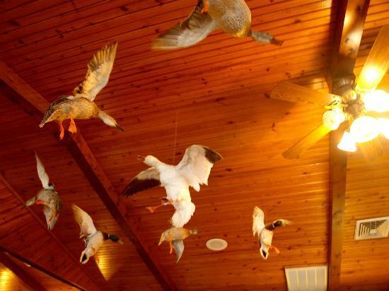 Jojo's Catfish Wharf: Ducks flying overhead inside the restaurant (stuffed)