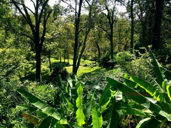 Shadetree Inn: View of the grounds from the Sun Room patio 