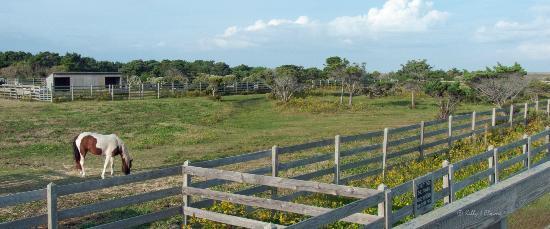 Ocracoke Pony Pens: Pony Pen