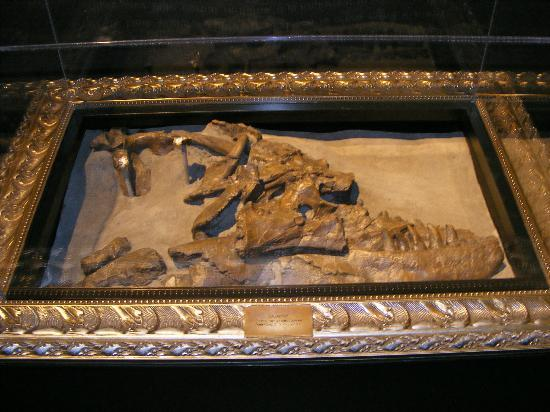 Royal Tyrrell Museum: Skull of Albertosaurus discovered by Joesph Tyrrel