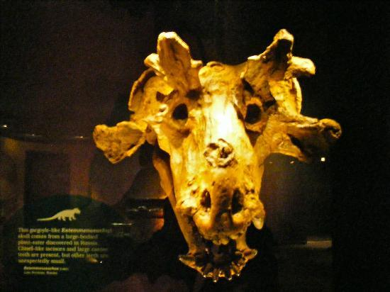 Royal Tyrrell Museum: Estemmenosuchus Skull
